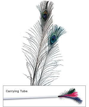 Witch knjizara! Feather